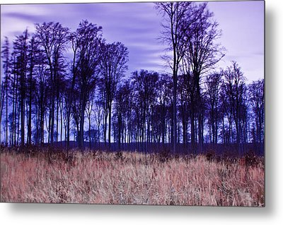 Winter Forest At Sunset In Hungary Metal Print by Gabor Pozsgai