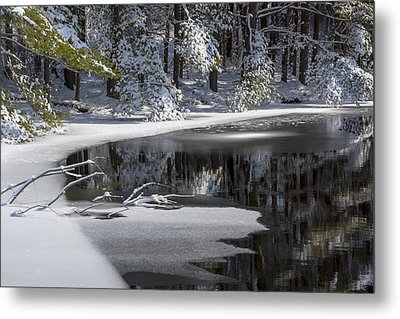 Winter Fresh Metal Print by Karol Livote