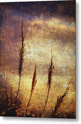 Winter Gold Metal Print by Skip Nall