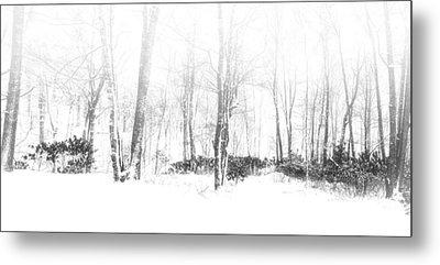 Snowy Forest - North Carolina Metal Print