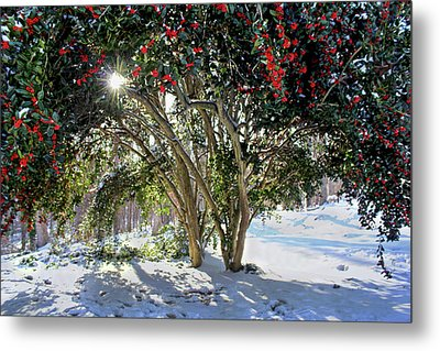 Metal Print featuring the photograph Winter Holly by Jessica Brawley