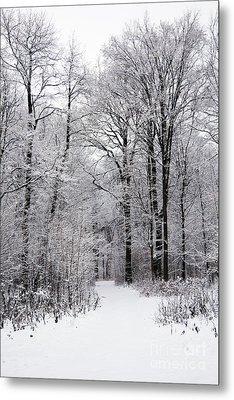 Winter In The Forest Metal Print by Gabriela Insuratelu