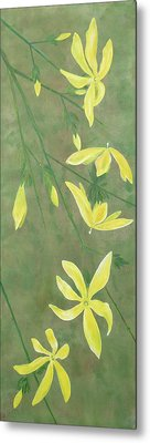 Winter Jasmine Metal Print by Barbara Moignard