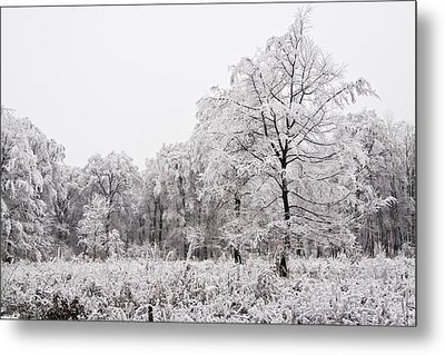 Winter Landscape Metal Print by Gabor Pozsgai