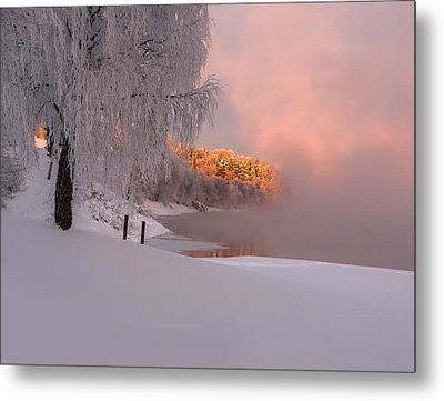 Winter Light Metal Print by Rose-Maries Pictures
