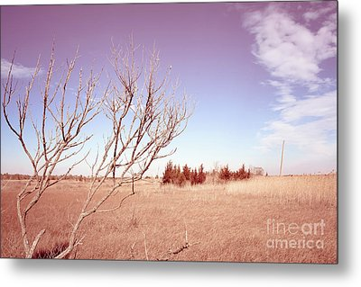 Metal Print featuring the photograph Winter Marshlands by Colleen Kammerer