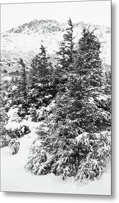 Winter Night Forest M Metal Print