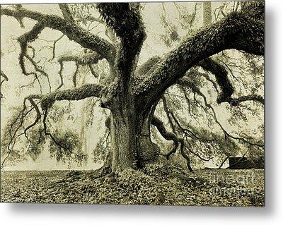 Winter Oak Metal Print by Scott Pellegrin