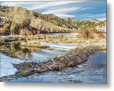 Winter On Beaver Swamp Metal Print by Marek Uliasz
