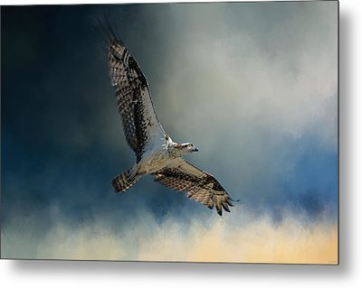 Winter Osprey Metal Print by Jai Johnson