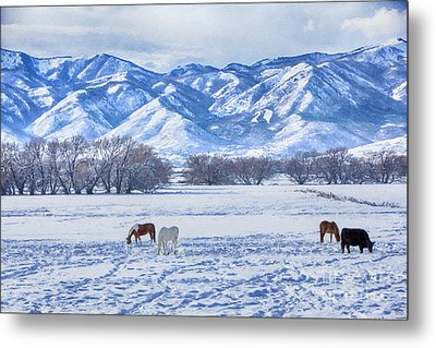 Winter Pasture Metal Print by David Millenheft