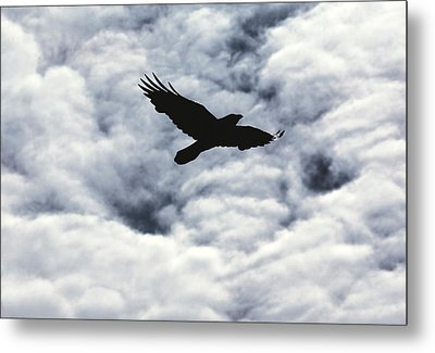 Winter Raven Metal Print by Daniel Furon