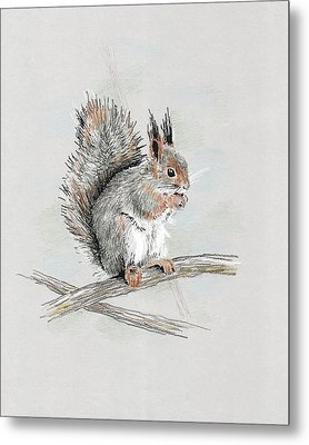 Winter Red Squirrel Metal Print