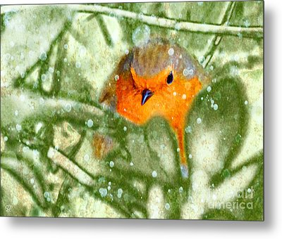 Metal Print featuring the photograph Winter Robin by LemonArt Photography