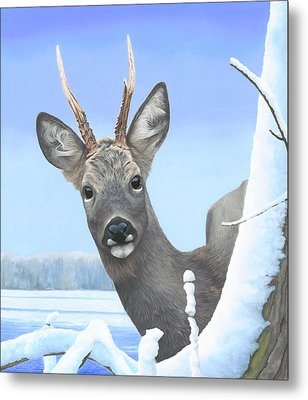 Winter Roebuck Metal Print by Clive Meredith