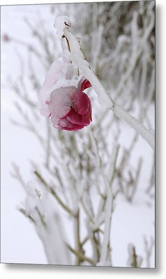 Winter Rose Metal Print by Arthur Fix