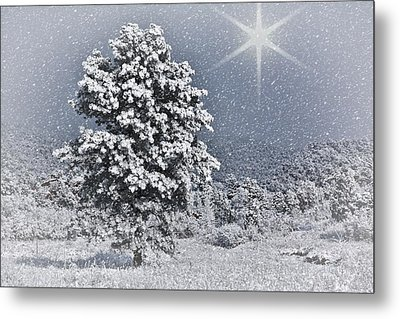 Metal Print featuring the photograph Winter Solitude 2 by Diane Alexander