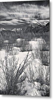 Winter Spice In Monochrome Metal Print by Royce Howland