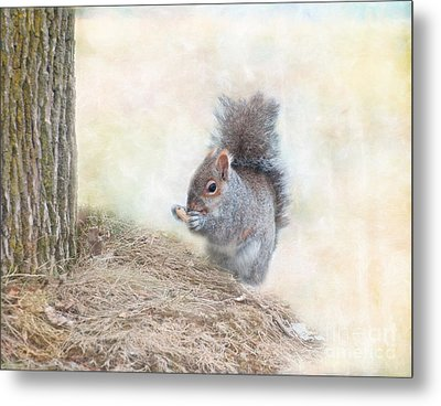 Winter Squirrel Metal Print by Kathleen Rinker