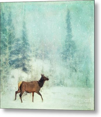 Winter Stroll Metal Print by Priska Wettstein