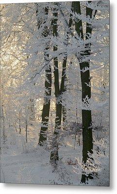 Winter Sun Metal Print by Odd Jeppesen