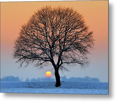 Winter Sunset With Silhouette Of Tree Metal Print
