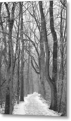 Winter Trail Metal Print by Peter  McIntosh