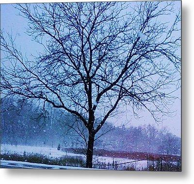 Winter Tree II Metal Print by Anna Villarreal Garbis