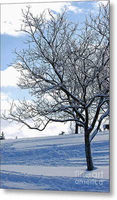 Metal Print featuring the photograph Winter Tree by Lila Fisher-Wenzel