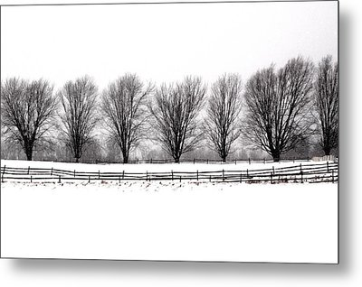 Metal Print featuring the photograph Winter Treeline by Don Nieman