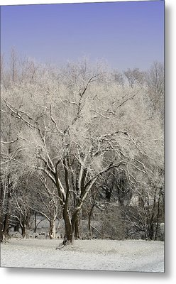 Winter Trees Metal Print by Diane Merkle