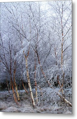 Winter Trees Metal Print by Jacqi Elmslie