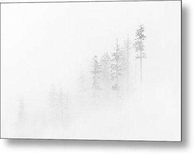 Winter Veil Metal Print by Mike  Dawson