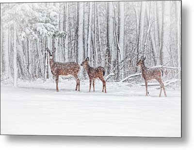 Winter Visits Metal Print