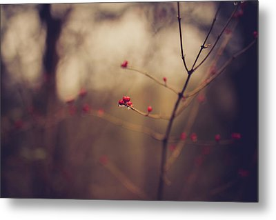 Metal Print featuring the photograph Winter Whispers by Shane Holsclaw