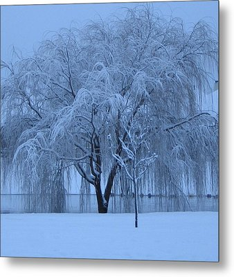 Winter Willow Tree Before Dawn_fort Worth_tx Metal Print by Barbara Yearty