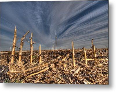Winter Wind In Corn Field Metal Print by Stephan Mazurek