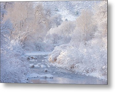 Winter Wonderland - Colorado Metal Print by Darren White