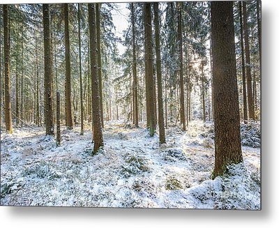 Metal Print featuring the photograph Winter Wonderland by Hannes Cmarits