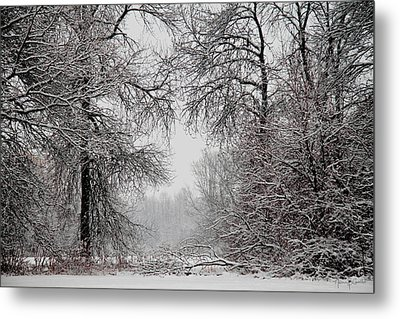 Winter Wonderland II Metal Print