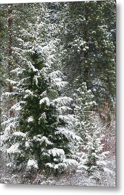 Metal Print featuring the photograph Winter Woodland by Will Borden