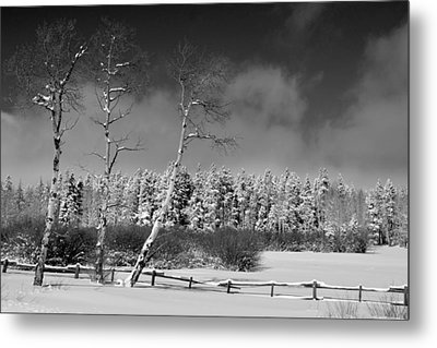 Metal Print featuring the photograph Winters Allure.. by Al Swasey