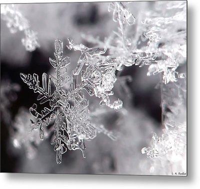 Winter's Beauty Metal Print by Lauren Radke