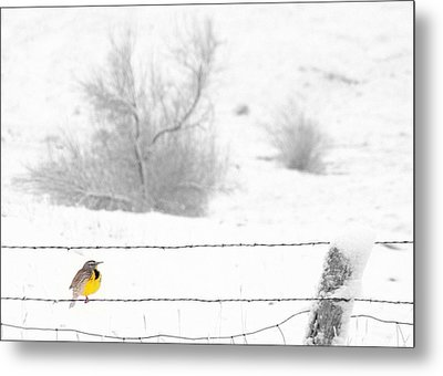 Metal Print featuring the photograph Winters Color by Al Swasey