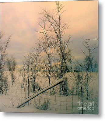 Winter's Face Metal Print by Elfriede Fulda