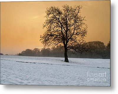 Winters Morning Metal Print by Nichola Denny