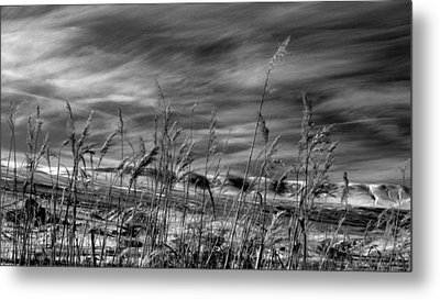 Metal Print featuring the photograph Winters Wheat by Al Swasey