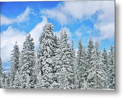 Winterscape Metal Print by Jeff Kolker