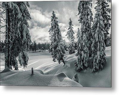 Winter Wonderland Harz In Monochrome Metal Print