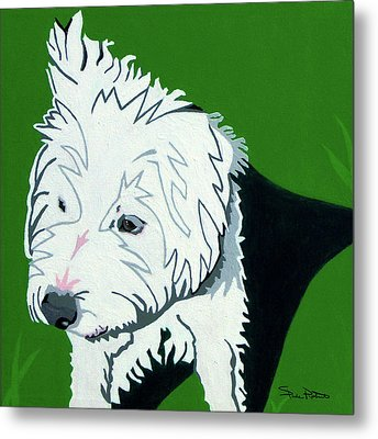 Wirehaired Jack Russell Terrier Metal Print by Slade Roberts